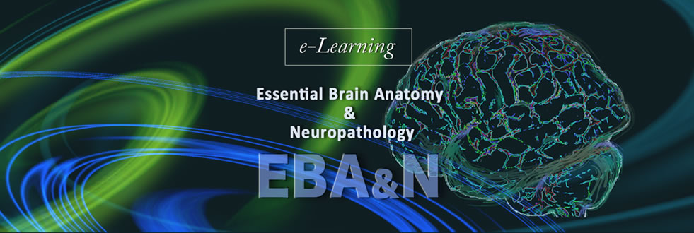 Essential Brain Anatomy Neuropathology website